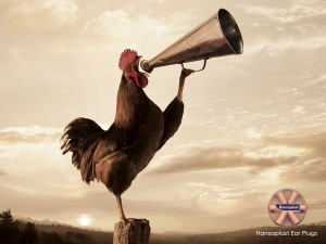 early-riser-rooster